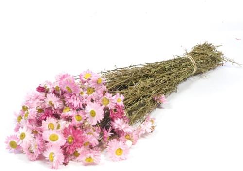 Acroclinium pink natural bundel. droogbloemen
