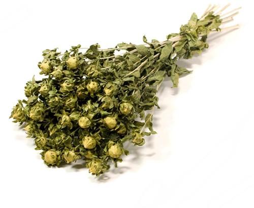 Bidens (Carthamus) Green natural Carthamus groen