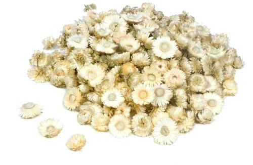 Helichrysum heads 1 kilo BULKVERPAKKING Wit Strobloemhoofdjes