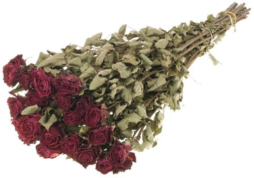 Trosrozen Gedroogd Roses Bright Torch spray natural RED Roses 'Bright Torch' 20pc SB