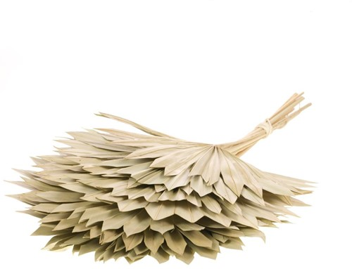 Palmspear Sunspear 10 st Palmspear Groot blad
