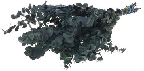 Gepreserveerd Eucalyptus BABY preserved Dark Blue   Gepreserveerd
