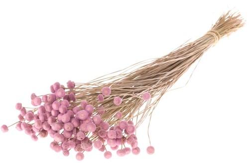 Botao SB pink  fijne droogbloemetjes