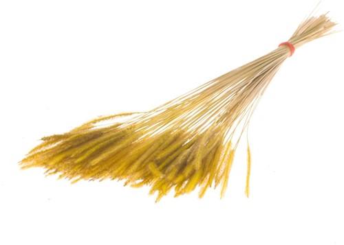 Soft worms grass Yellow leuk gras en alternatief voor Lagurus