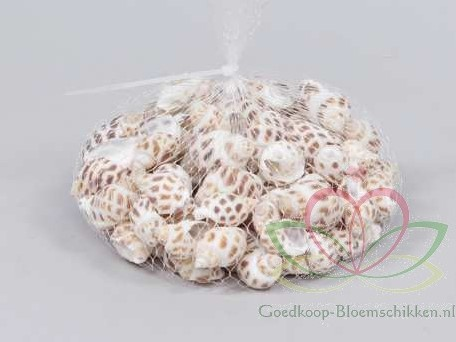 Babylonia Areolata schelpen +/- 150 gram