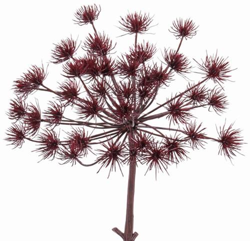 """Dille, Anethum graveolens, (schermbloem) spray """"Jumbo"""",dia 35cm  Berenklauw Burgundy kortere steel 45cm"""