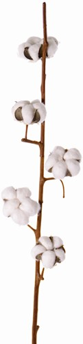 Katoentak (cotton spray) 90cm, 5 bloemen kunst Premium-Quality