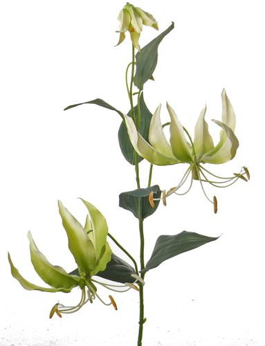 Gloriosa GroenWit 81cm Zijdebloem