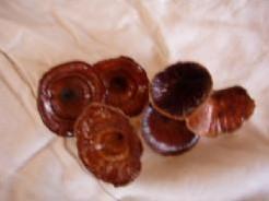 Golden Mushroom 10 st Golden Mushroom