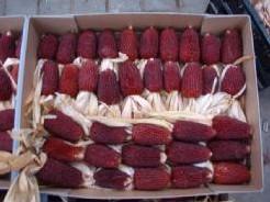 Aardbeienmais zaden