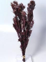 Salignum red with cone Salignum red with cone