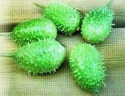 Cuc Anguria = sier