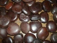 Panga Pangara seeds zak 400 gr Panga Pangara s