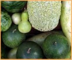 Lagenariamix kleine vruchten Lagenariamix kleine vruch