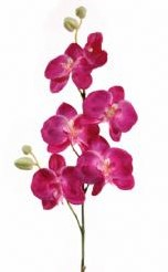 Orchidee Fuchsia +/- 6 bloemen / tak Orchidee Fuchsi
