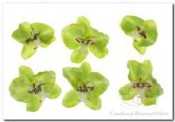 Orchidee hoofd lichtGroen 8. 5 cm. /pak 6 Orchidee hoofd