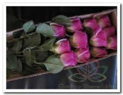 Roos kunstroos zijde Paars doos 23/24 op=op Roos kunstroos