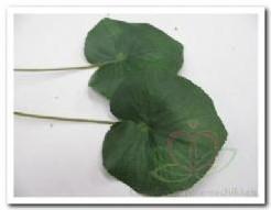 Blad zijde Lotus/Galaxblad +/- 10 cm./stuk Blad zijde Lotu