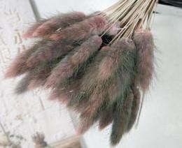 Lagurus Ovatus bundel +/- 30st Gradient Pink Pluimgras graspluimen