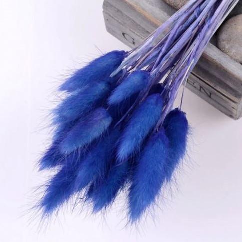 Lagurus Ovatus bundel +/- 60st Royal Blue Pluimgras graspluimen