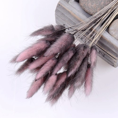 Lagurus Ovatus bundel +/- 30st Coffee Pink Pluimgras graspluimen