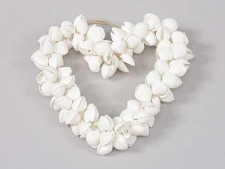 Schelpenhart White Clamrose 15 cm.