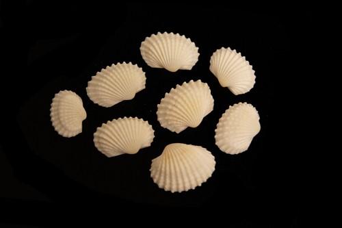 White Chippy schelpen 1 kilo