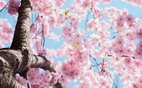 Winter Blossom - geurolie voor Melts en Kaarsen en Zeep 10ml