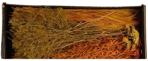 Droogbloempakket Dried flowers mix tray Orange droogbloem boeketten zelf maken