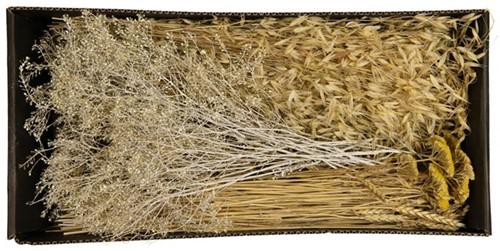 Droogbloempakket Dried flowers mix tray White Whash met yellow droogbloem boeketten zelf maken