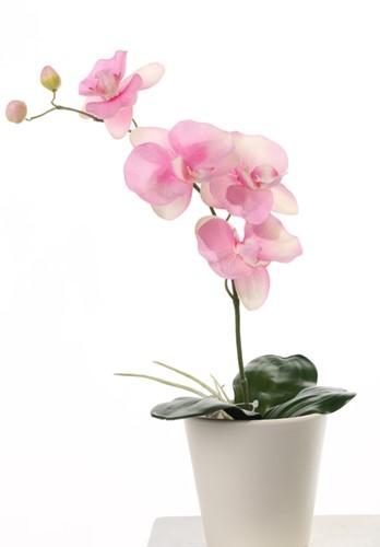 Orchidee Phalaenopsis Roze PLANT blad en wortels  Zijdebloem 1tak 4 bloemen 44cm