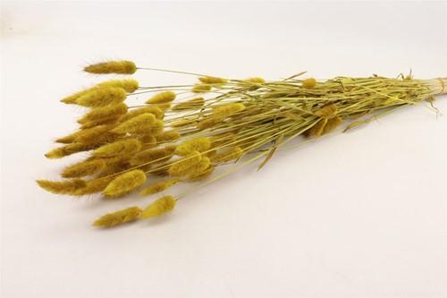 Lagurus Ovatus 100 gr in hoes Geel Pluimgras graspluimen Yellow
