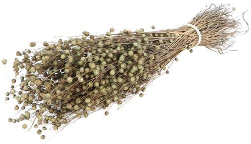 Alsi Grass Grey Grijs Bundel 100 gr +/- 60cm droogbloemen