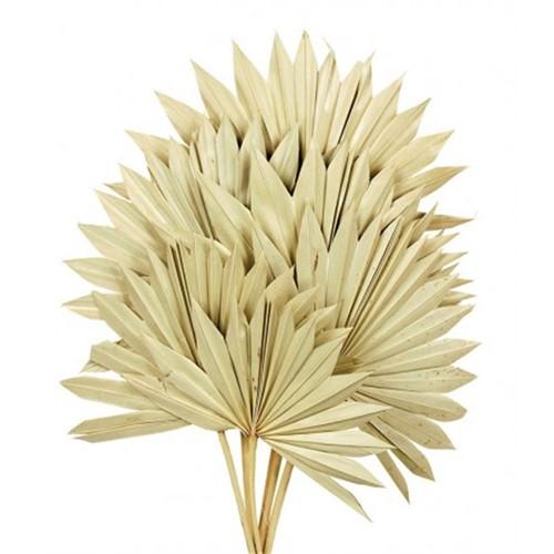 Sun Spear Palm Sun 6pc L45-55 W±30 Sun Spear