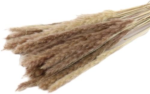 Fluffy Pampas 35gr 75-80cm Naturel Pampas gras