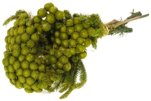 Gepreserveerd Albiflora preserved SB natural YELLOW Geprepareerd groen