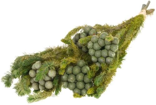 Gepreserveerd Albiflora preserved SB natural green  Geprepareerd groen