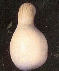 Cushaw white