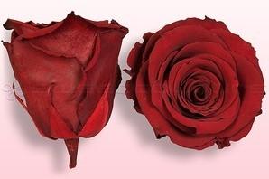 Geconserveerde rozen DONKERRood L Doos4 Geconserveerd