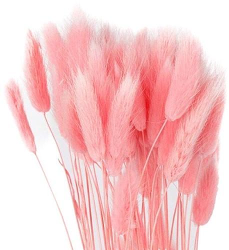 Lagurus Ovatus bundel +/- 30st Roze Pluimgras graspluimen