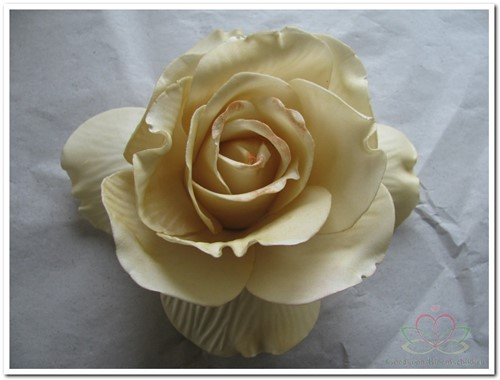 foam Rose Sophie 14cm. Cava Doos 12 voordeelpak