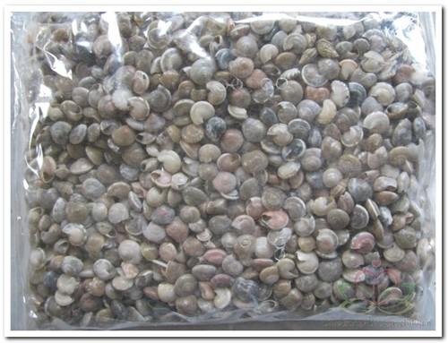 Umbonium schelpenmix 400 gram