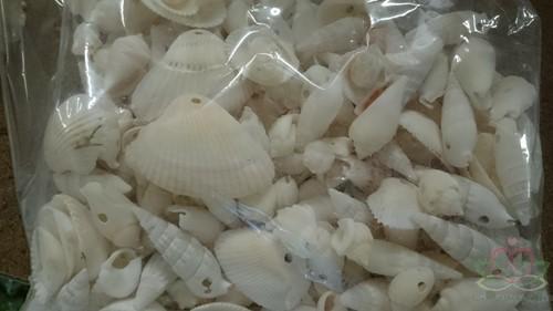 Gemengde schelpen geboord wit, 1 kilo