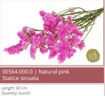 Statice sinuata natural SB Pink Lamsoor