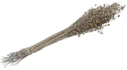 Lino Grass Vlas Linum Bundel White wash 100 gr   droogbloemen
