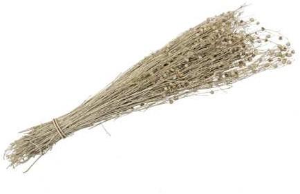 Lino Grass Vlas Linum Bundel Yellow Geel 100 gr   droogbloemen