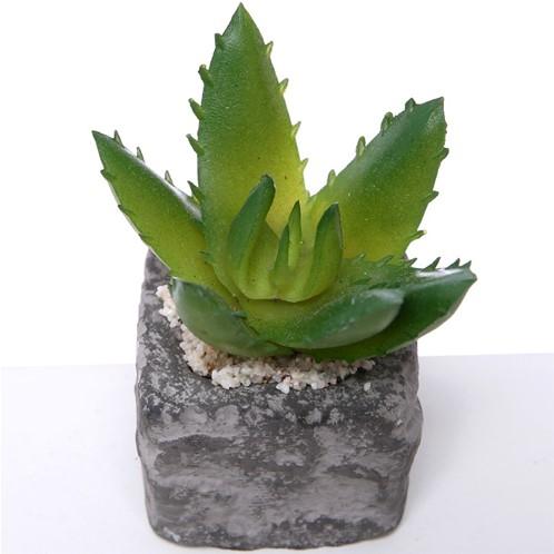 Actie SUCCULENT in steeneffectpotje 7.5cm Succulent