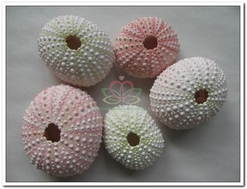 Zeeegel Zee-egel naturel roze, 25 stuks