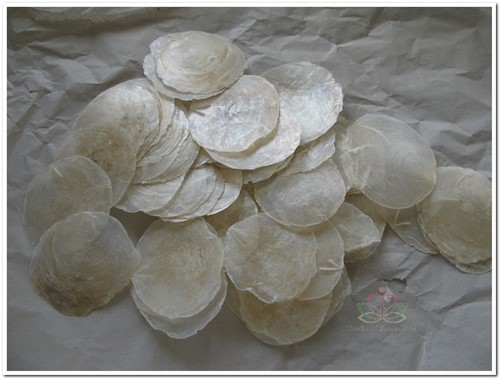 Capiz Camar schelpen 500 gram